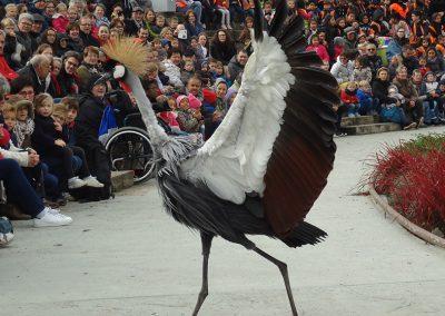 Parc aux oiseaux oct. 2016